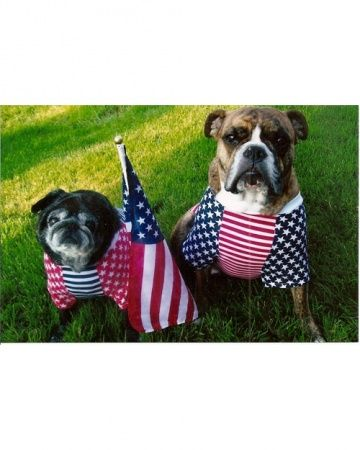 17 Best images about Fourth of July Pets on Pinterest ...
