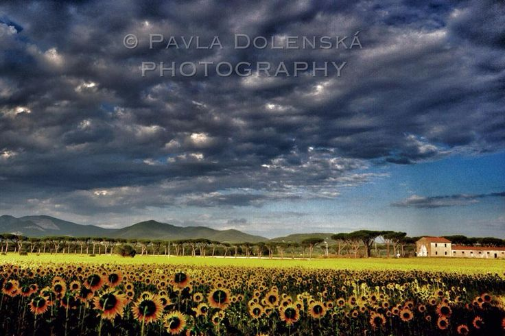 Pavla Dolenská Photography