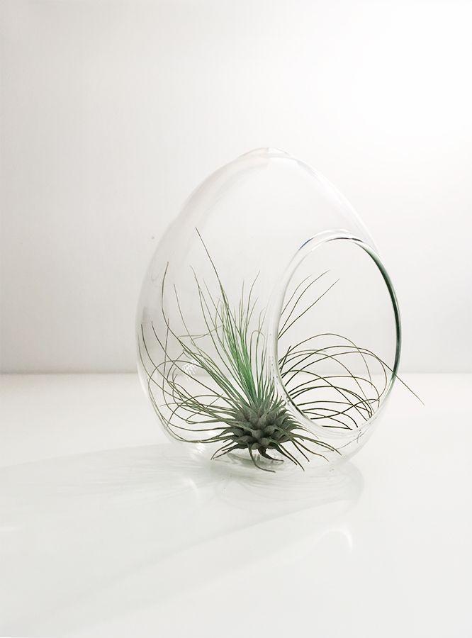 Skapa ett miniatyr-universum med dina airplants.