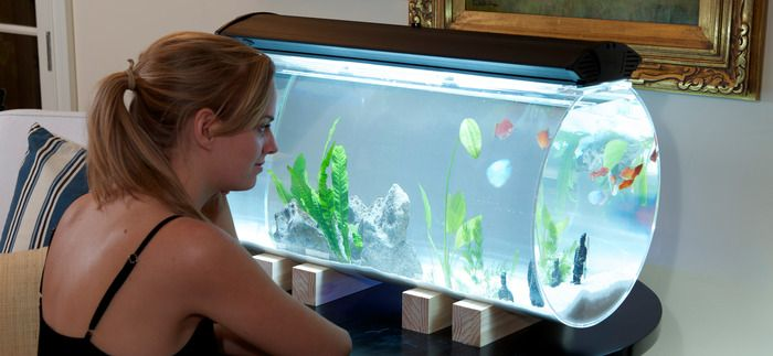 17 best images about aquarium specialty glazing on for Tube fish tank