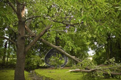 Wind Injury To Plants: How To Fix Wind Damaged Plants -  Strong winds can damage or kill landscape plants. Dealing with wind damage promptly and properly can improve a plant's chances of survival, and in many cases, the plant will recover its former graceful glory. Learn more in this article.