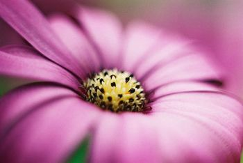 Lovely flowers. Pinned by @Marly | Namely Marly. #flowers #photography: Macros, Macro Macro Photography, Flowers, Digital Photography, Pretty Flower, Flower Photography, Purple Flower, Photography Inspiration