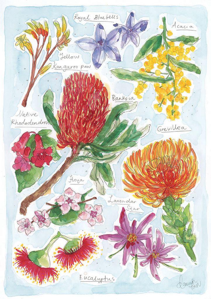 Best australiana embroidery kits images on pinterest