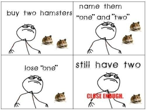 Image result for so cute hamsters