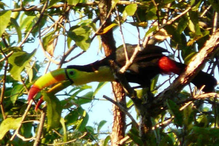 1000 Images About Birds Of The Yucatan On Pinterest