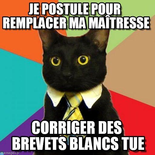 Business cat meme (http://www.memegen.fr/meme/mlsv6x)