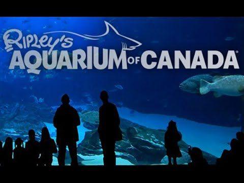 RIPLEY'S AQUARIUM of CANADA - An Undersea Family Adventure Destination