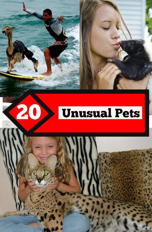 This Post S Going To Give You Some Major Pet Goals And Also The Ability To Be Brave Enough To Keep These Pets And Not R Unusual Animals Animals And Pets