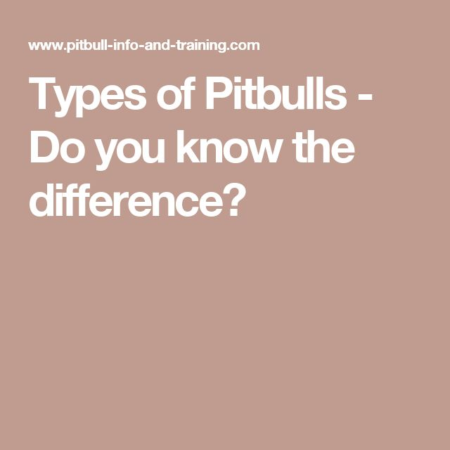 Types of Pitbulls - Do you know the difference?