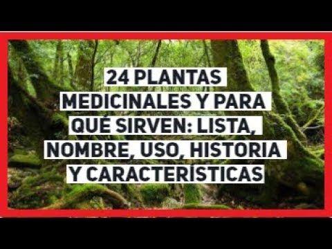 24 Plantas Medicinales Y Para Que Sirven Lista Nombre Uso