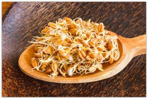 Naklíčená pšenice pro přípravu domácího amasaké