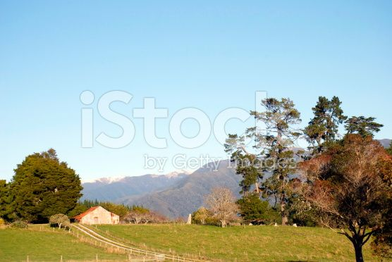 Early Morning Rural Scene, New Zealand royalty-free stock photo