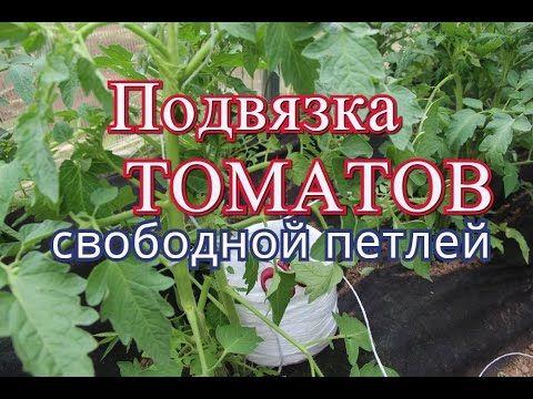 Много советов по ТОМАТАМ: подвязка, подкормка и .... - YouTube