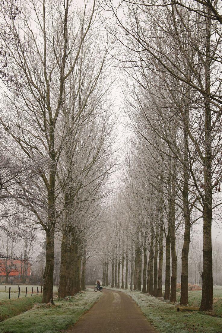 Nijkerk, the Netherlands (VanSlichtenhorst family tree)