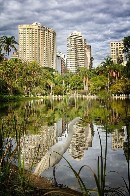 Belo Horizonte, Minas Gerais -  Brazil (by Kim Schandorff)