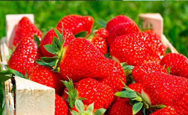 Вьющаяся клубника у Вас на балконе с помощью приспособления Topsy Turvy Strawberry Planter