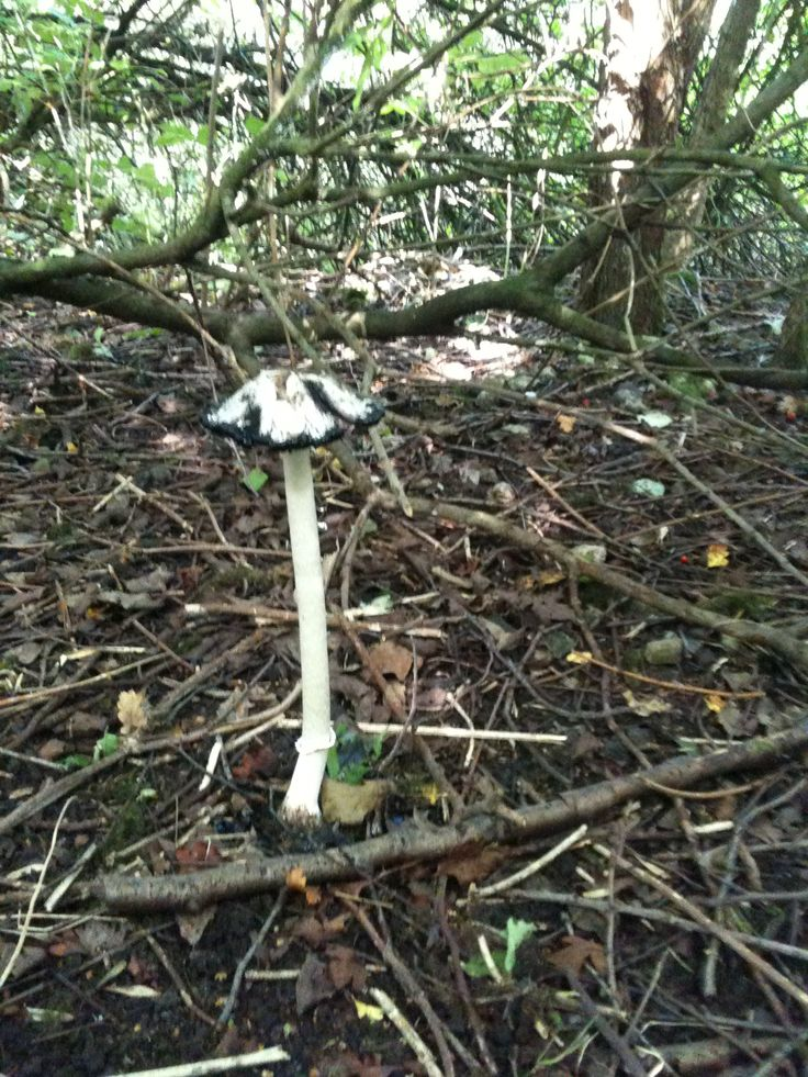 Very tall mushroom