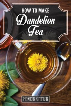 Best Dandelion Root Tea & Home Remedies   Easy and Healthy Recipe For Young Living by Pioneer Settler  http://pioneersettler.com/best-dandelion-root-tea