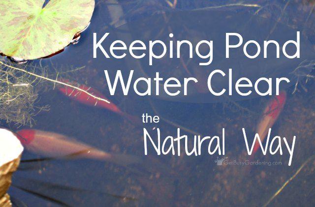 1000 Ideas About Pond Algae On Pinterest Farm Pond