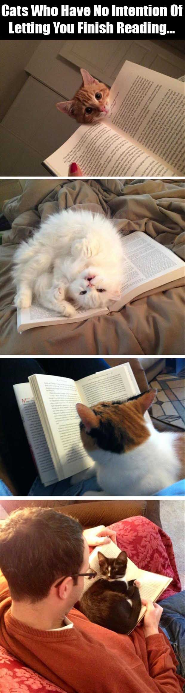 Dump A Day Cats Have No Intention Of Letting You Finish Reading - 10 Pics