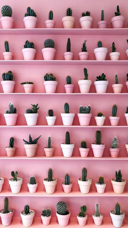 Le cactus et le rose : deux tendances déco qu'on adore pour ajouter une touche …