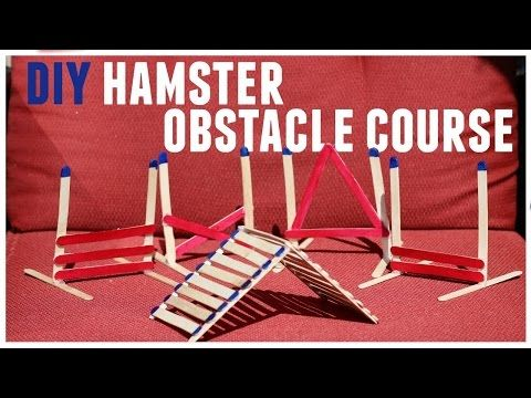 3 easy DIY hamster toys - YouTube