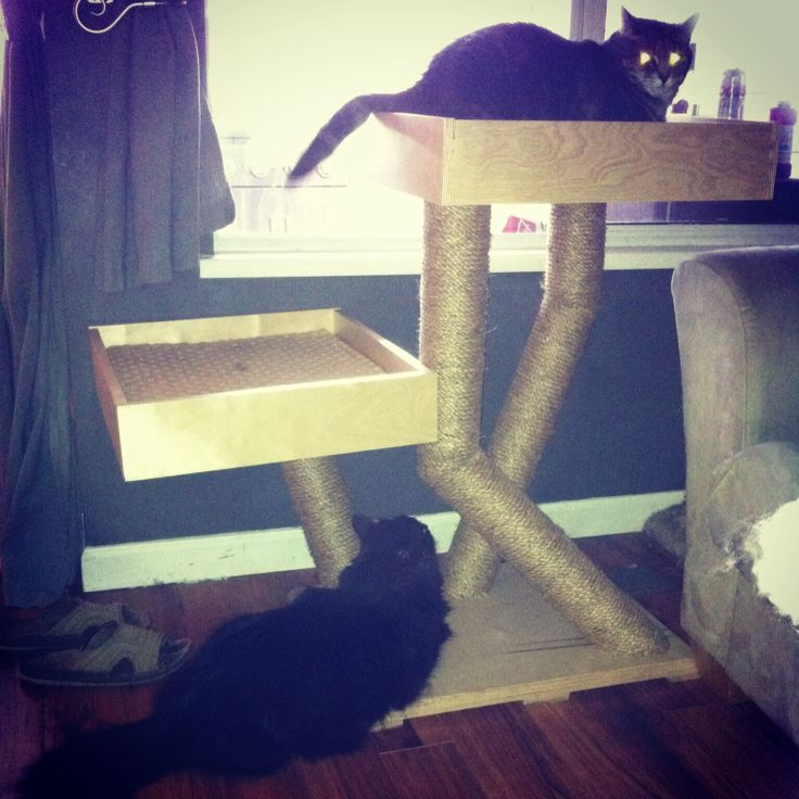 Here are some furry friends checking out their new Cats Grass furniture!