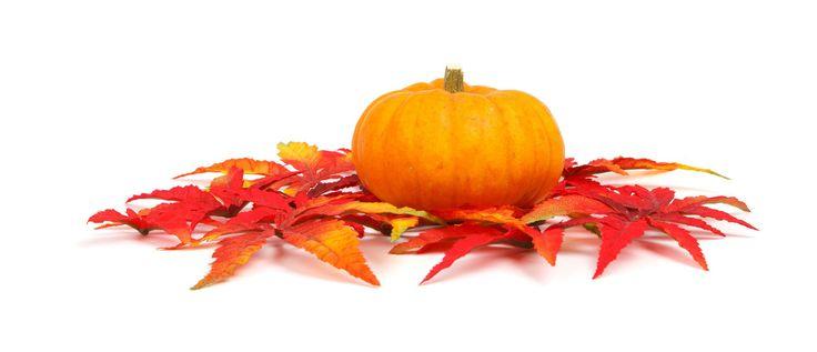 Herbstzeit ist auch Teezeit - mit tollen Farben und Matcha! Mehr im Blog von Koumei Matcha: http://www.koumei-matcha.de/herbst-matcha-tee-zeit/ #herbst #matcha #autumn