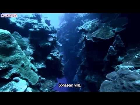 A Természet szól hozzád – Harrison Ford, az Óceán - YouTube