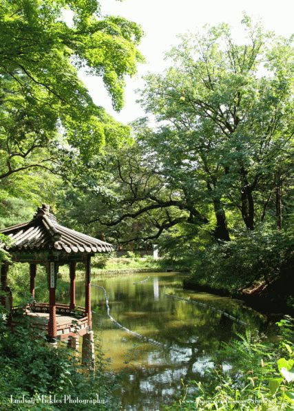 Changdeokgung Palace, Seoul - This shot was taken from the Secret Gard #koreangarden #secretgarden #anguk #kiosque #lac