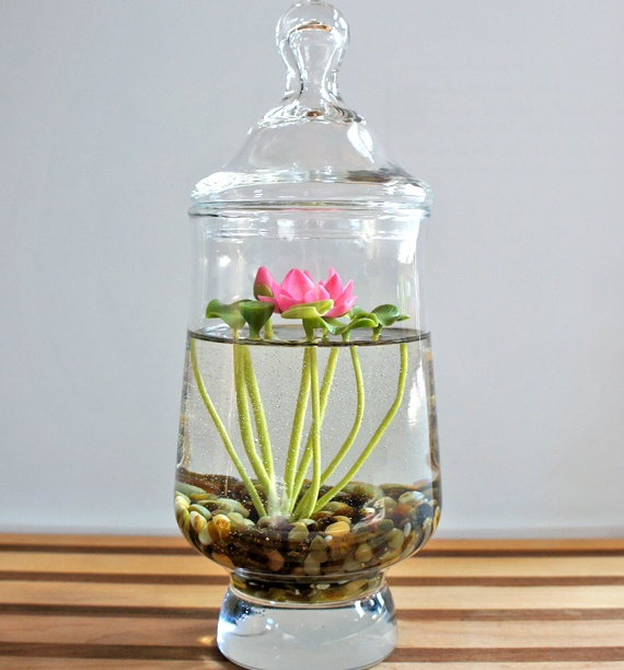 Miniature Lotus Water Lily Terrarium.  This is so beautiful.  I'd love to have a large Terrarium, or bonsai bowl to grow my own in.  No lids, don't want to obscure the view.