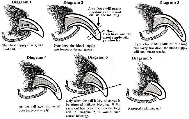 dog nail clipping information