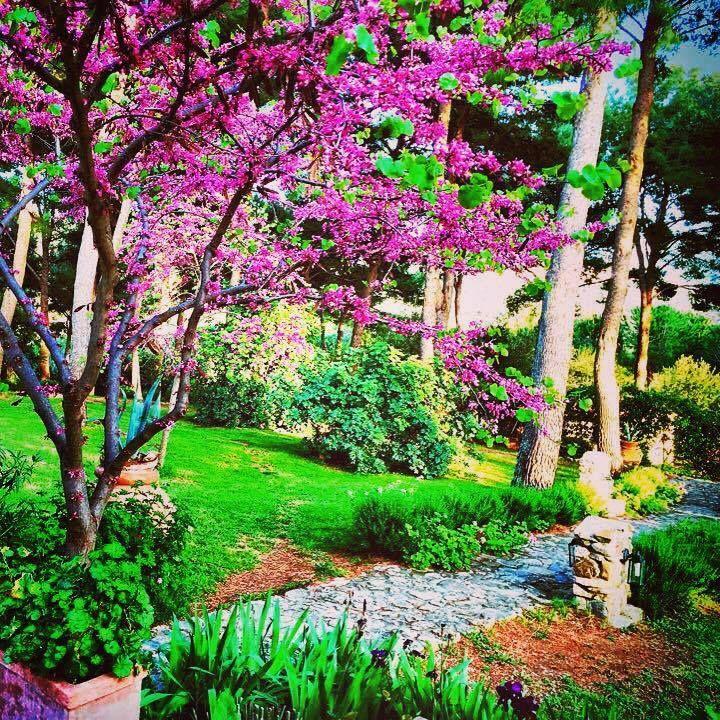 Flowers @relais_poggioaisanti #poggioaisanti #relais #bestboutiquehotel #hotel #sanvincenzo #tuscany