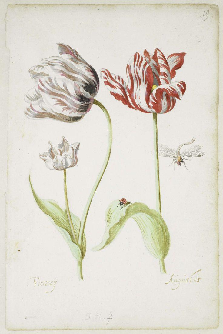 Twee tulpen met insecten, Jacob Marrel, 1624 - 1681