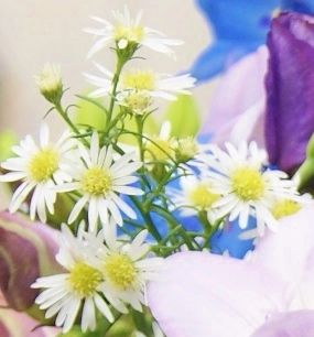 Florissimo - Flowers for weddings and events in Shropshire. ASTER, ALL YEAR. From Florissimo Flower Directory at https://uk.pinterest.com/ByFlorissimo/flower-directory/ | White, pink, pale purple and dark purple