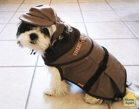 16 best Halloween - It's for the dogs! images on Pinterest ...