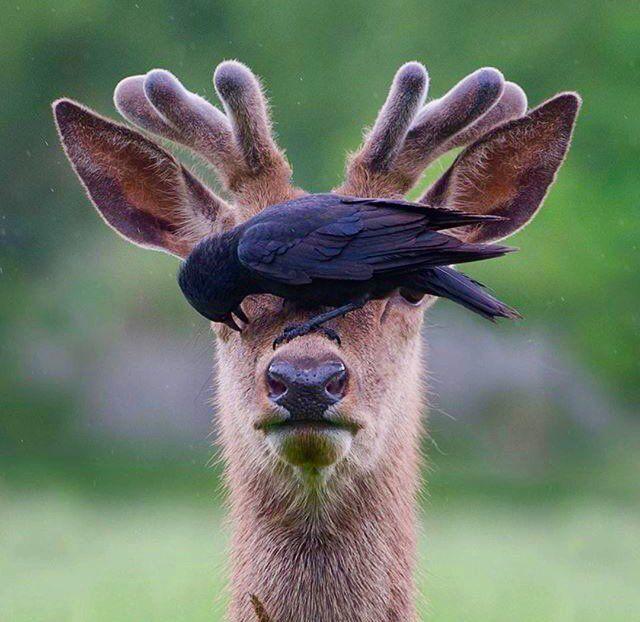 аксессуар нереально смешные фото наглых животных приветливый хозяин