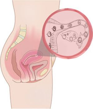 Évolution de bébé durant la grossesse, semaine après semaine, trimestre après trimestre. Découvrez quelle taille fait bébé et les symptômes de la maman.