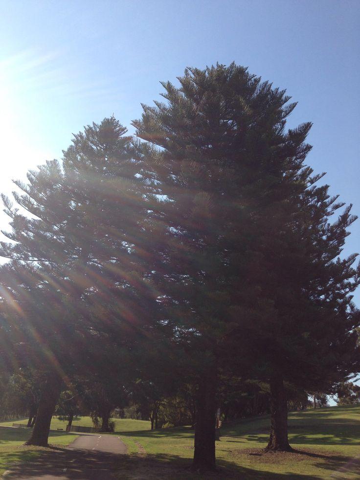 sunlight piercing the tree