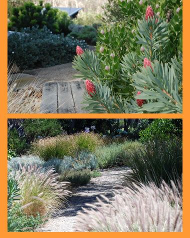 Best 25 Coastal gardens ideas on Pinterest Australian garden