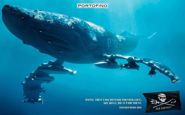 portofino-sea-shepherd-2