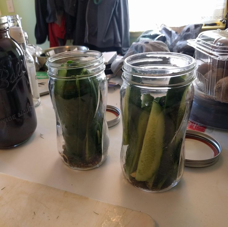 Trying refrigerator pickles for the first time with cucumbers fresh from the garden! #gardening #garden #DIY #home #flowers #roses #nature #landscaping #horticulture