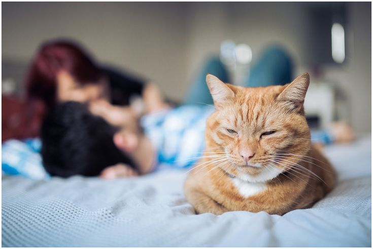 Engagement with a cat in Cheshire