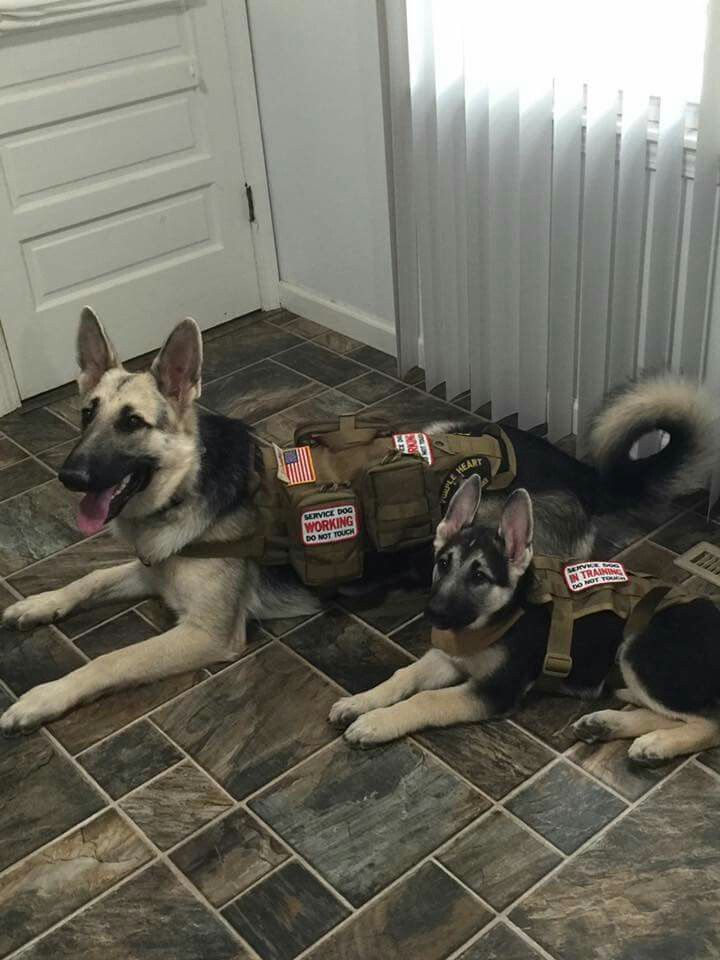 Service GSDs