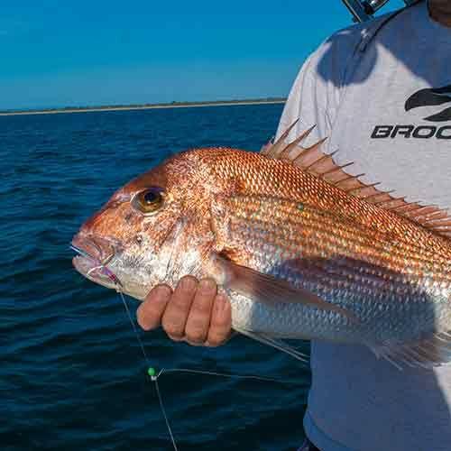 Fishing Report Mornington Frankston Port Phillip Bay