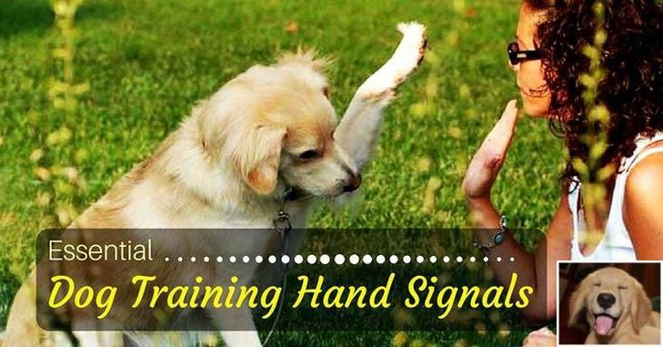 Stop Dog Jumping And Dog Training Tips Website Check Pin For