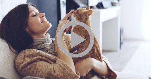 Une Américaine a eu la belle surprise de retrouver Diego, son chat disparu depuis deux ans dans un refuge. Une belle histoire !