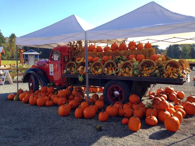 Display of pumpkins & other harvested veggies