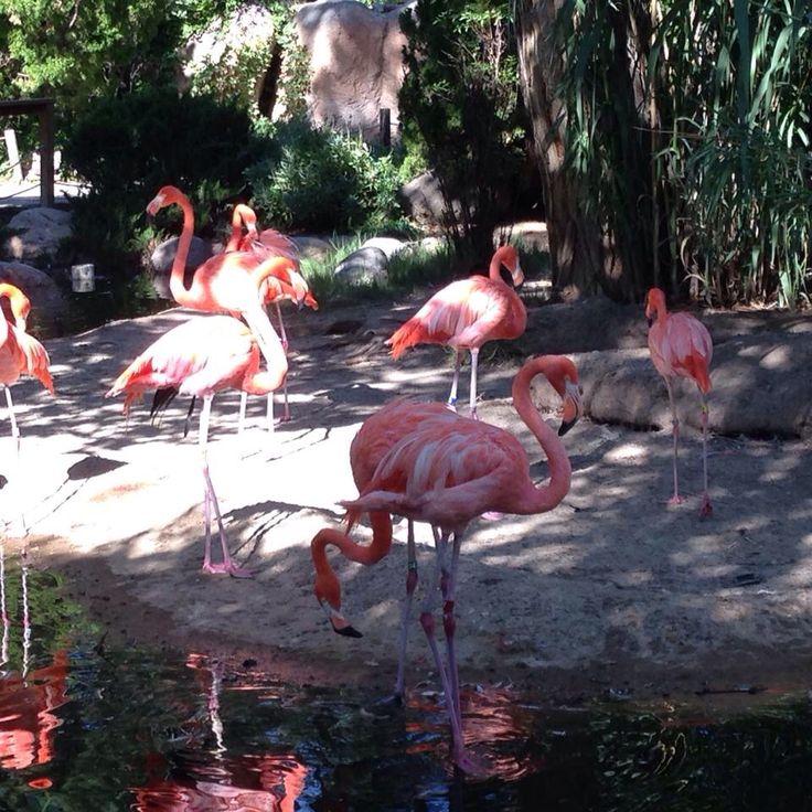 Albuquerque zoo flamingos