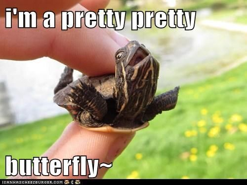 I used to have a turtle just like this and he's always do that. I named him Sid, after Sid Vicious. I miss himmmmm :.(